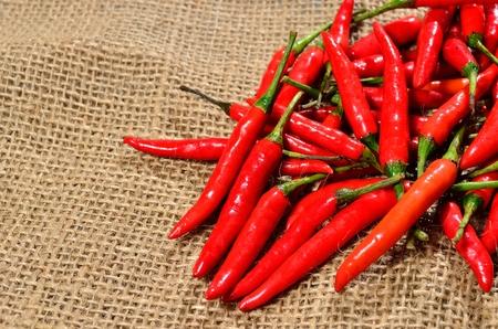 gunny bag: red hot chili pepper on the jute gunny bag