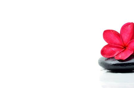 black stones: Zen stones with frangipani flower