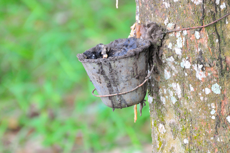tapping: Rubber tapping industry