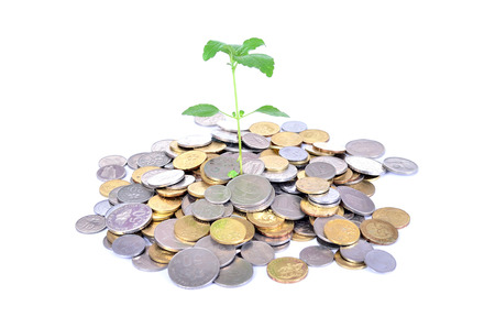 financial concept: Financial Growth concept, Stack golden coin over white background