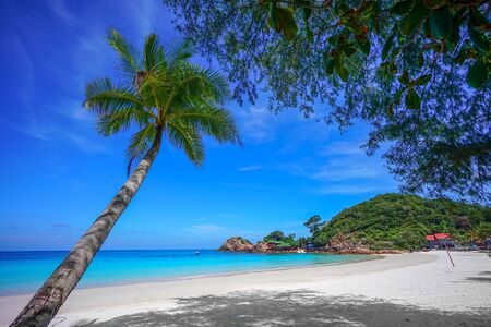 Coconut tree and beautiful blue beach at Redang Island, Malaysia