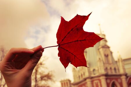 Red maple leaf in a hand of young woman