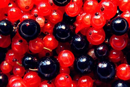 Berry background with red currant and black currant photo