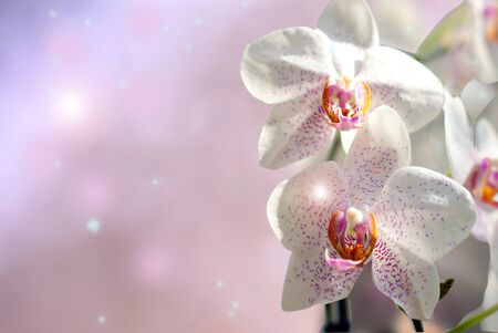 Orchid flowers as an abstract background photo