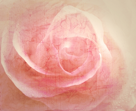 Rose vintage background photo