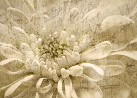 White flower vintage background Stock Photo
