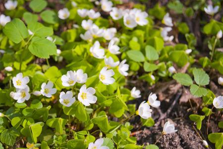 Beautiful spring flowers Stock Photo