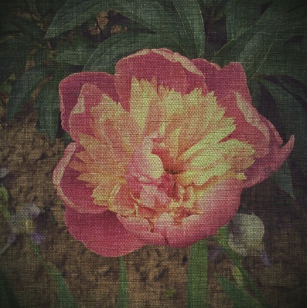 Vintage photo of a beautiful flower
