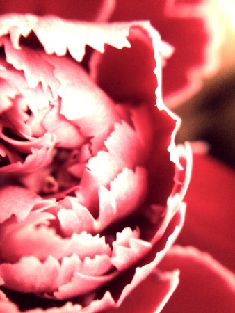 Macro photo of a red light flower Stock Photo