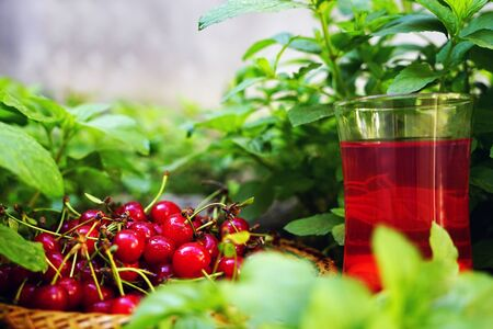 bing: red ripe cherry and cherry drink green grass