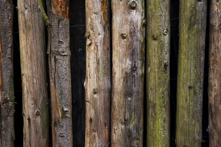 wall of wooden bars, branches, background texture