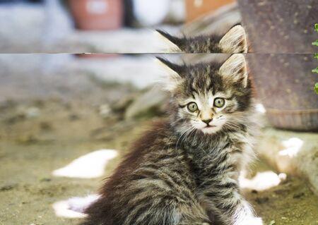 a pretty little gray kitten sitting in the yard.