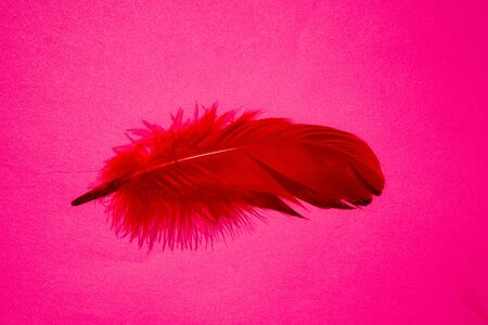 Red artificial feather close up. Exotic, tropical bird wing feather on pink background. Fashion, ornithology magazine cover concept. Macro accessories, clothes decoration texture Stockfoto