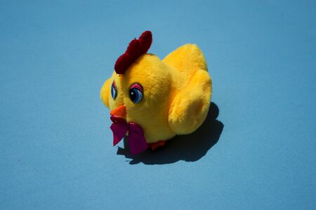 Shrilling Chicken squeaky toy . toy rubber shriek yellow chicken isolated on blue background