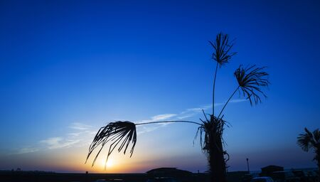 Beautiful silhouette coconut palm tree on the beach in golden sunset evening background. Travel tropical summer beach holiday vacation or save the earth, nature environmental concept.