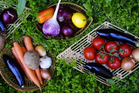 Composition with Various fresh vegetables, eggplants, onions,carrots, beets, tomatoes radishes, peppers on the green grass. The concept of healthy eating. Vegetarianism Reklamní fotografie