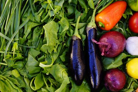 Composition with Various fresh vegetables, eggplants, onions,carrots, beets, tomatoes radishes, peppers on the green grass. The concept of healthy eating. Vegetarianism. Copy space Reklamní fotografie