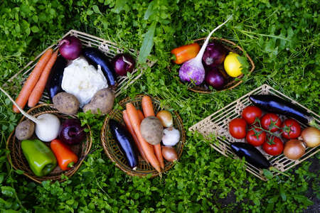 Composition with Various fresh vegetables, eggplants, onions,carrots, beets, tomatoes radishes, peppers on the green grass. The concept of healthy eating. Vegetarianism. Stockfoto