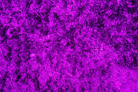 Texture of a purple corner carpet, background