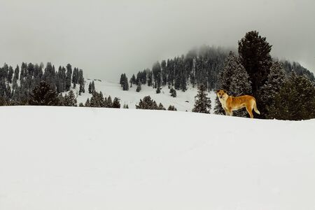 Dog in Snow Malam Jabba and Kalam Swat Scenery Landscape Foto de archivo