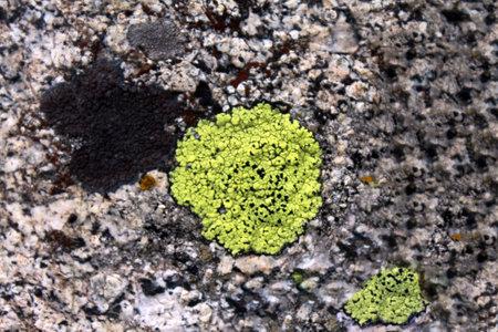 A closeup shot of a big stone surface
