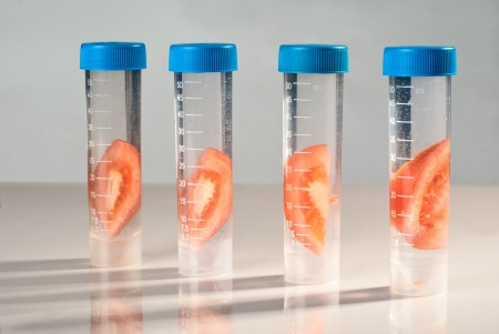 food science: Four tubes with tomato. Cloning experiment. Stock Photo
