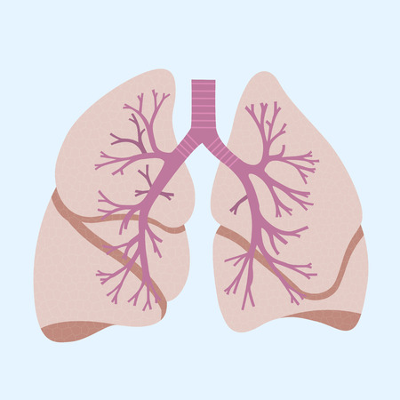 lung bronchus: picture of human lungs, flat style icon