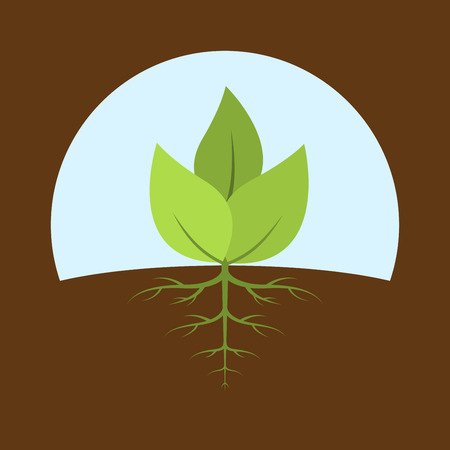 burgeon: picture of a sprout with leaves and roots, flat style illustration Illustration