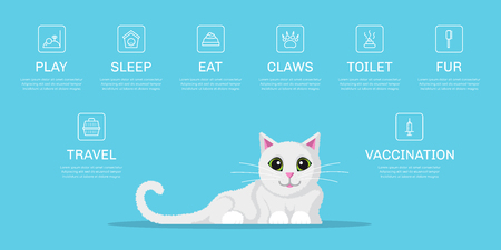 Picture of cute cat with icons of cat needs. Infographic template for pet shop, website, brochure design. Flat style illustration. Illustration