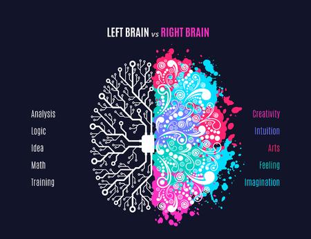 Concept de fonctions cérébrales gauche et droite, analytique vs créativité