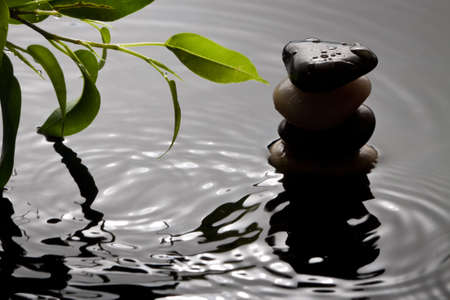 Green plant and pebbles with waterdrop and ripples photo