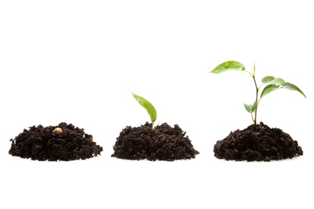 Process of growing of plant on ground growing Stock Photo