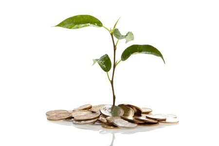 Plant on coins growing Stock Photo - 9338838