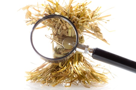 needles: Search needle in a haystack Stock Photo