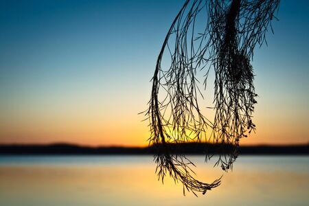 Silhouette of Reeds at Sunset in Lake photo