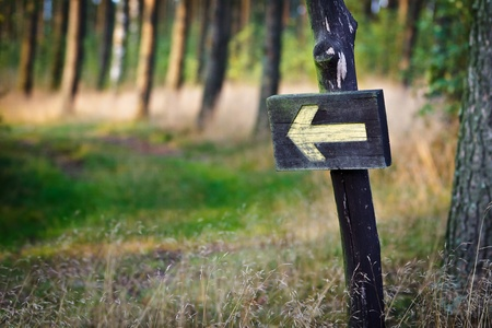 forked road: Yellow sign in the forest Stock Photo