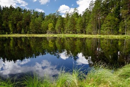 woods lake: Vista l'estate del lago nella foresta Archivio Fotografico