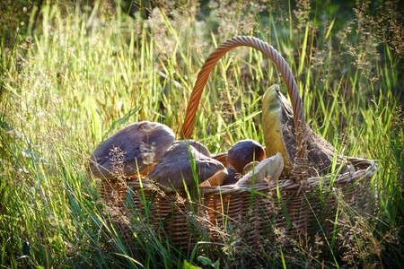 Fullfilled basket with mushrooms in the forest Stock Photo - 10289760