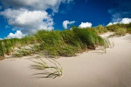 texel: Sea grass and dune with clouds and blue sky