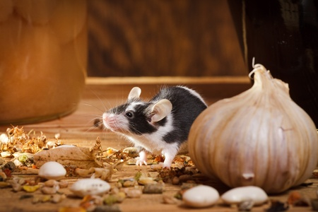 Small mouse smell something in basement Stock Photo - 10386919
