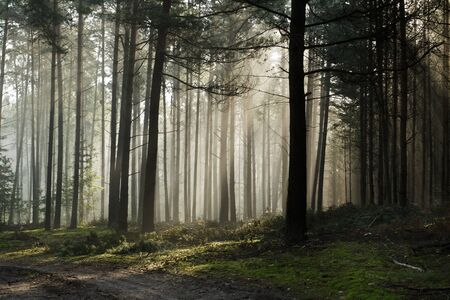 miracle leaf: Foothpath in the foggy misty forest