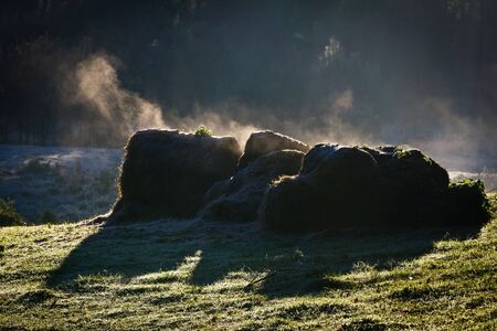 Frozen sheaf on meadow at sunrise Stock Photo - 10961179