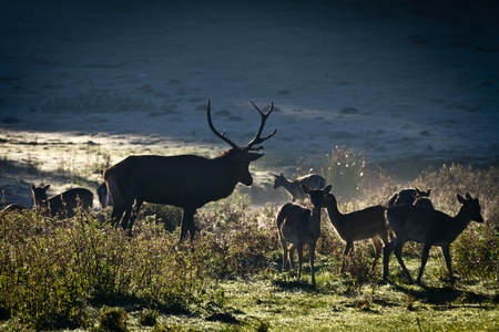 Herd of deer standing on the meadow at sunrise Stock Photo - 10961169