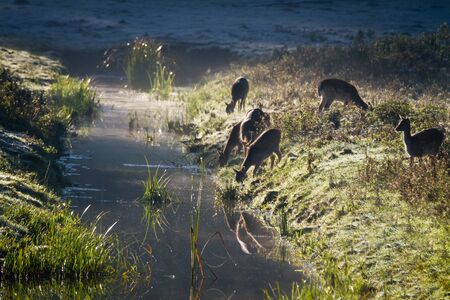 Reflection of antlers herd drinking water from the river at sunrise Stock Photo - 10961183