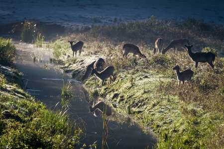 Reflection of antlers herd standing near the river at sunrise Stock Photo - 10961181