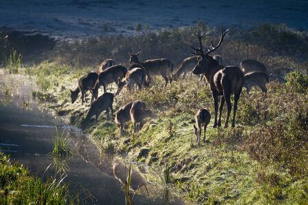 Deer standing on the frozen meadow near the river at sunrise photo