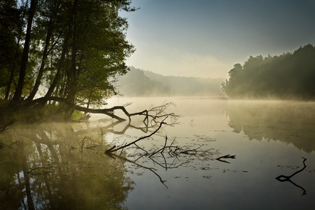 fog forest: Fog and lake at sunrise in fall