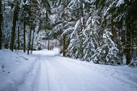 Snowy road in forest at winter photo