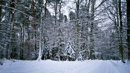 Snow in forest at winter day photo