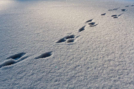 Footsteps on the snow in winter Stock Photo - 12583259